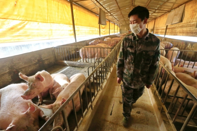 Explained: Here's All  About G4 — A New Form Of Swine Flu Virus With Pandemic Potential Discovered In China