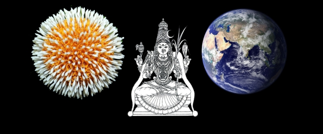 On her ears is the <i>kadamba manjari</i>: globe like inflorescence of <i>kadamba </i>flowers.
