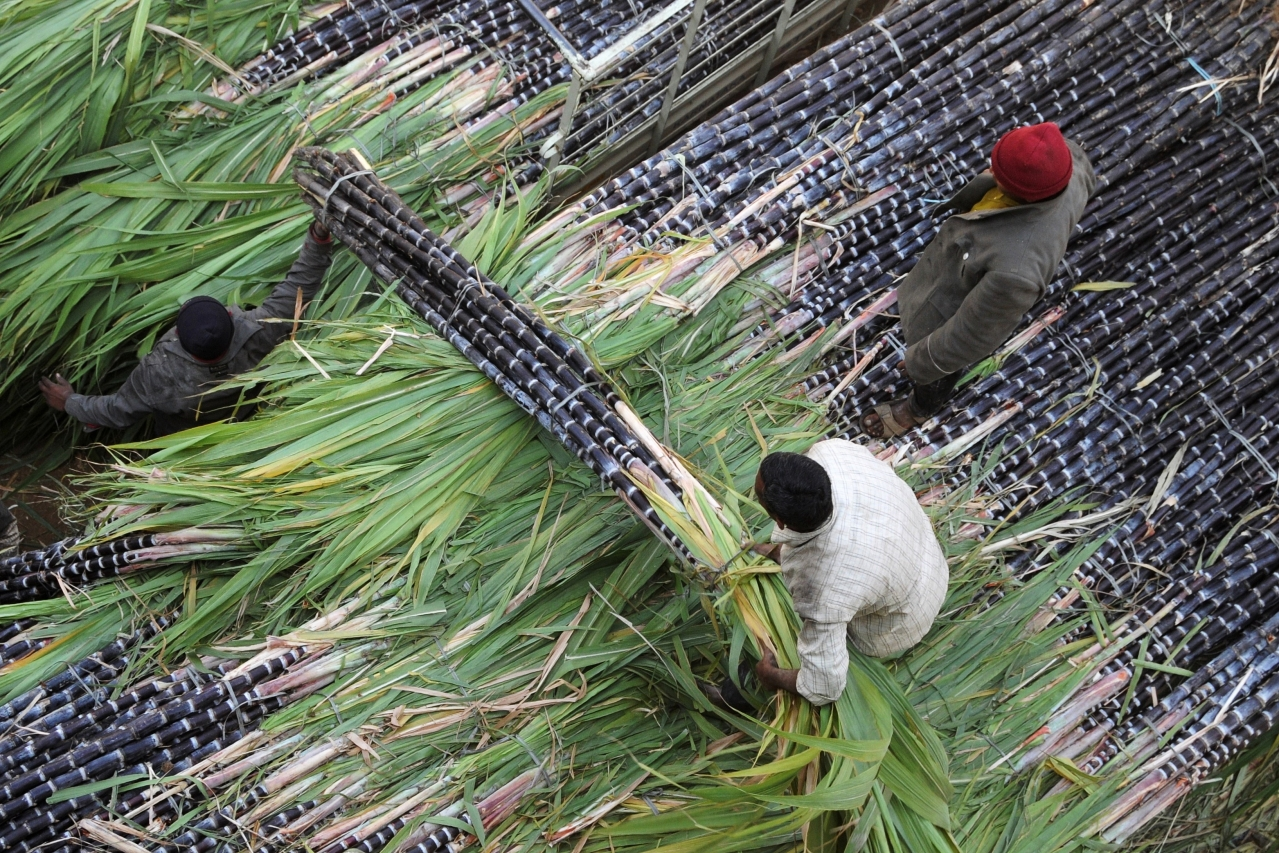 Sugar cane being transported. (Photo: Getty)