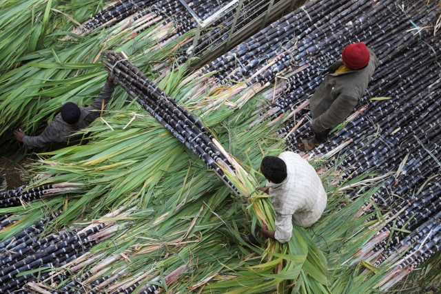 India Needs To Be Urgently De-addicted From Sugarcane Farming And Sugar Production