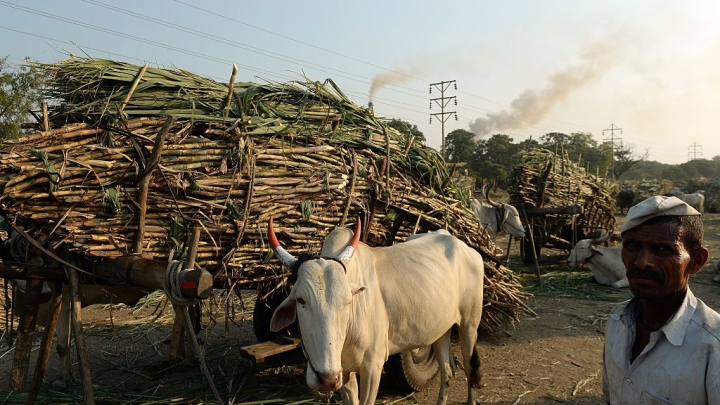 Sweetener For Sugarcane Farmers: Centre To Create Sugar Buffer Stock