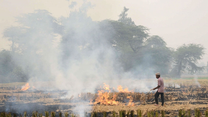 Air Pollution Woes: Stubble Burning In Punjab And Haryana Rises By Five Per Cent
