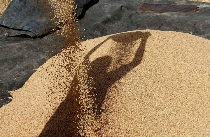 FCI Has Too Much Wheat: Either It Must Revise Prices, Or Auction Stocks