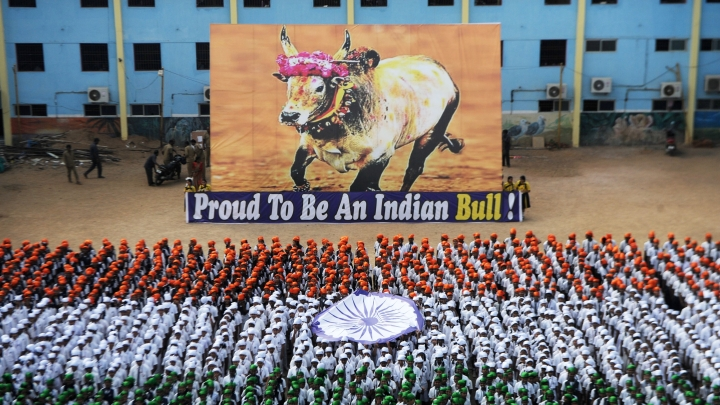 The Jallikattu Ban And Other Excesses Of The Secular, Socialist Elite