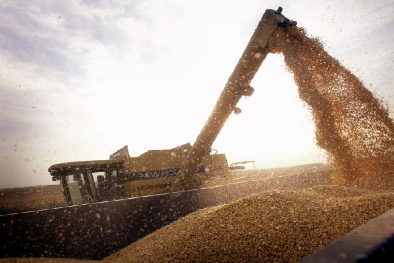 A container is being loaded with Bt-corn harvested from a farm near Rockton, Illinois. (Scott Olson/GettyImages)