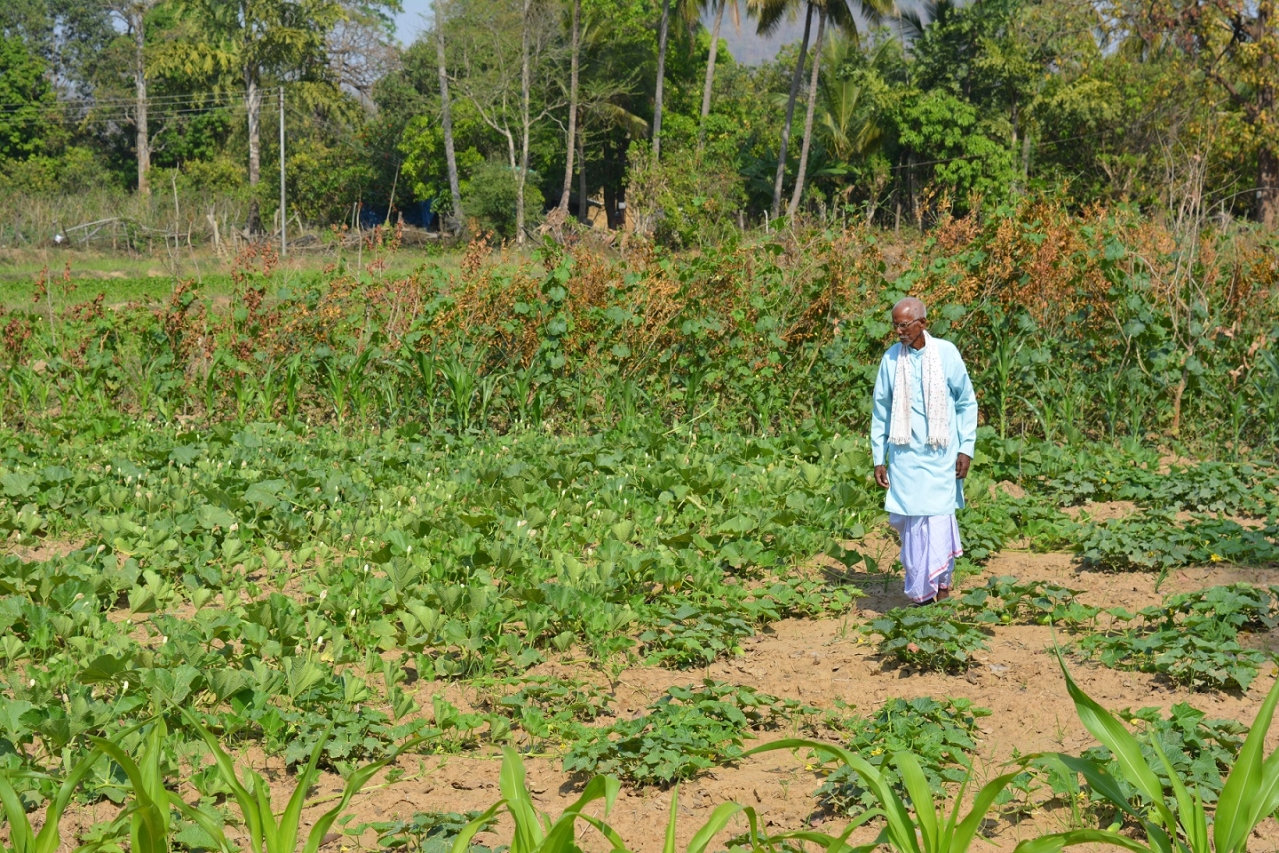 Rati ram Yadav tends to his organic farm at Karli village in Geedam