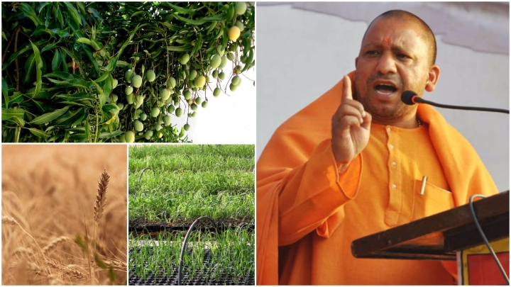 Tips For CM Adityanath: These 11 Steps Can Make Uttar Pradesh Agriculture 'Uttam'