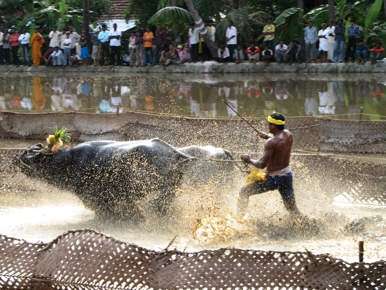 Kambala One Step Away From Being Declared Legal