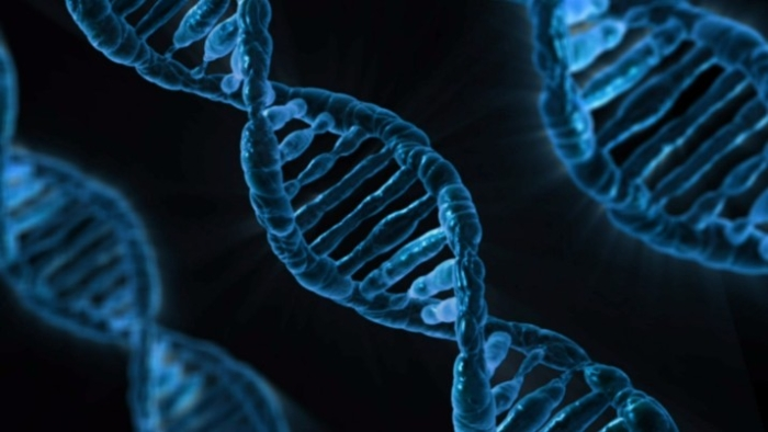 US Scientists Modify Genes In Human Embryos Using CRISPR