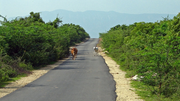 Budget 2019-20: Rs 80,000 Crore To Be Spent On Building & Upgrading 1.25 Lakh Km Of Rural Roads In Next Five Years