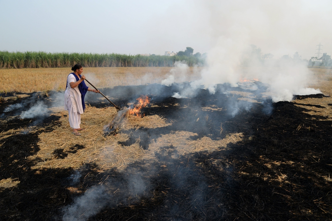 Paddy Stuble burning (Shammi Mehra/AFP/Getty Images)