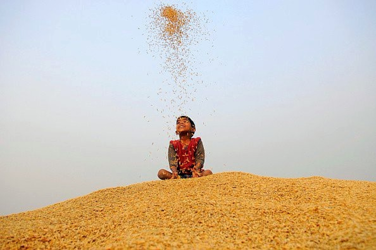 A little boy plays with rice grains during crop harvesting. (Burhaan Kinu /Hindustan Times via Getty Images)