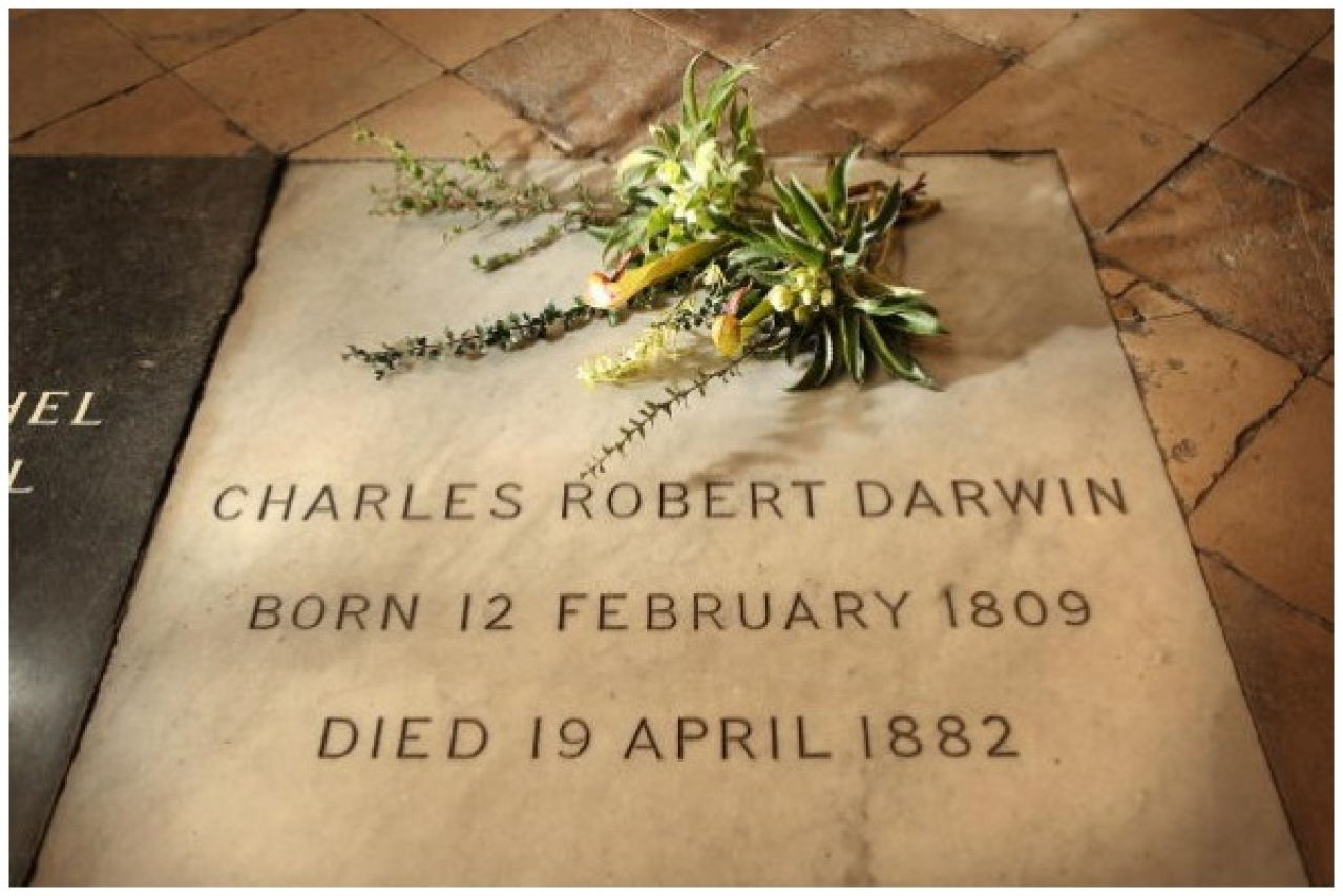 A wreath of plants from Charles Darwin's garden lie on his grave on the 200th anniversary of his birth at Westminster Abbey on February 12, 2009 in London. (Peter Macdiarmid/Getty Images)