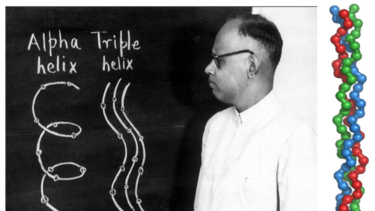 G N Ramachandran with a drawing of the triple helix model.