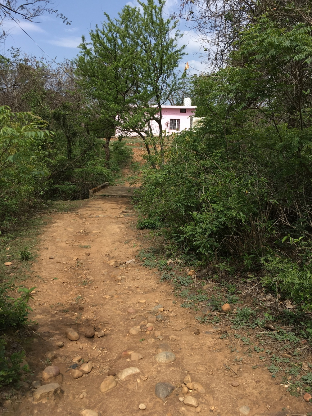 The mud track from Sanji Ram's house that leads to the Devasthan (in pink). The stretch visible is almost half of the entire path. A few steps towards the left leads one to the spot where  the body was allegedly discovered by one Jagdish Raj.