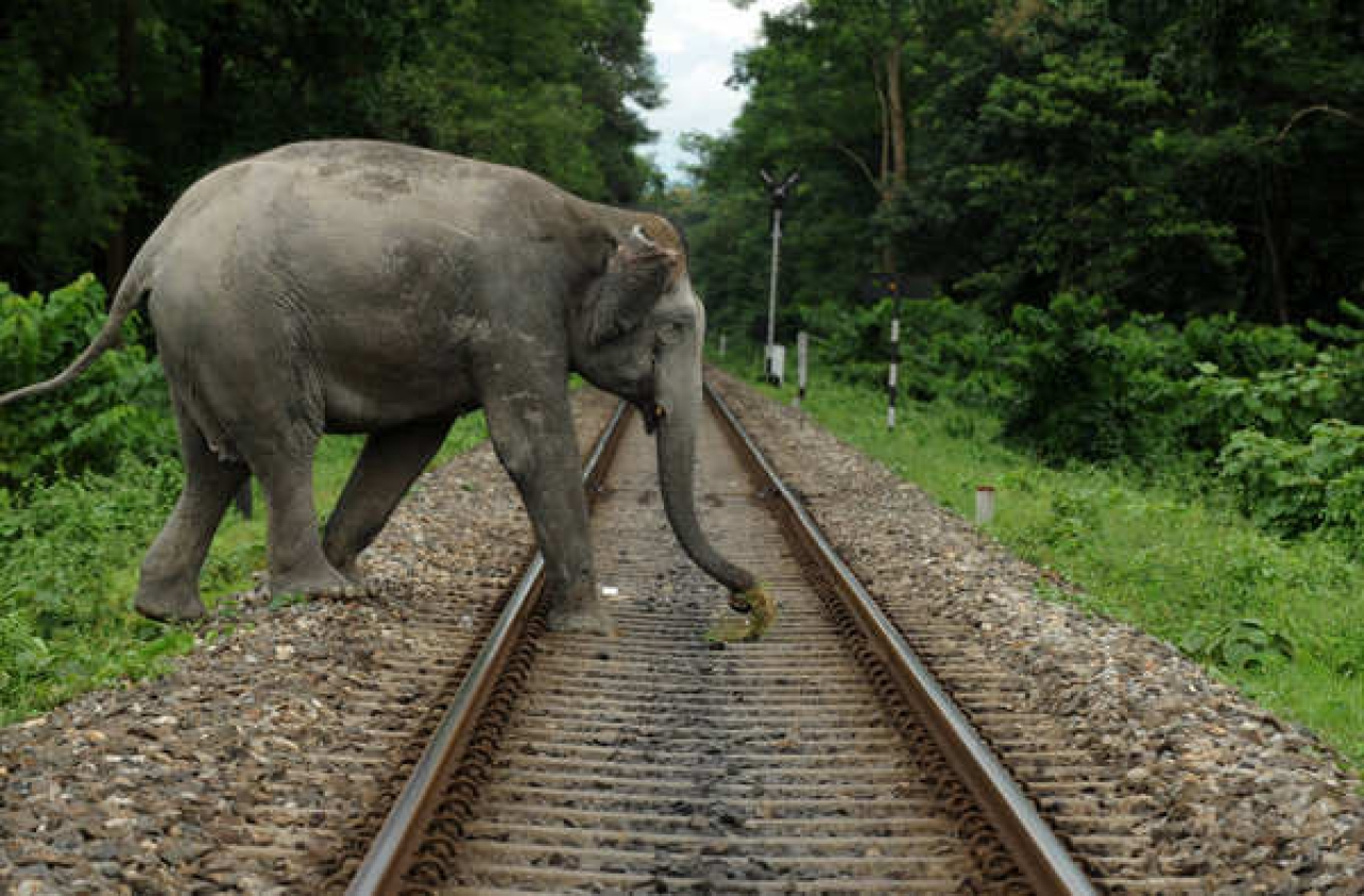 Indian Railways Installs Seismic Sensors, Thermal Cameras Near Rajaji Tiger Reserve To Avoid Wildlife Collision