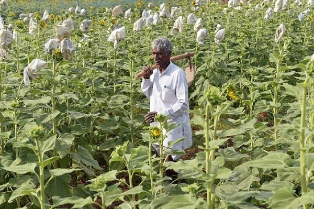 A farmer seen surveying his crop. There is now a need to shift attention from farm loan waivers to farm finance.