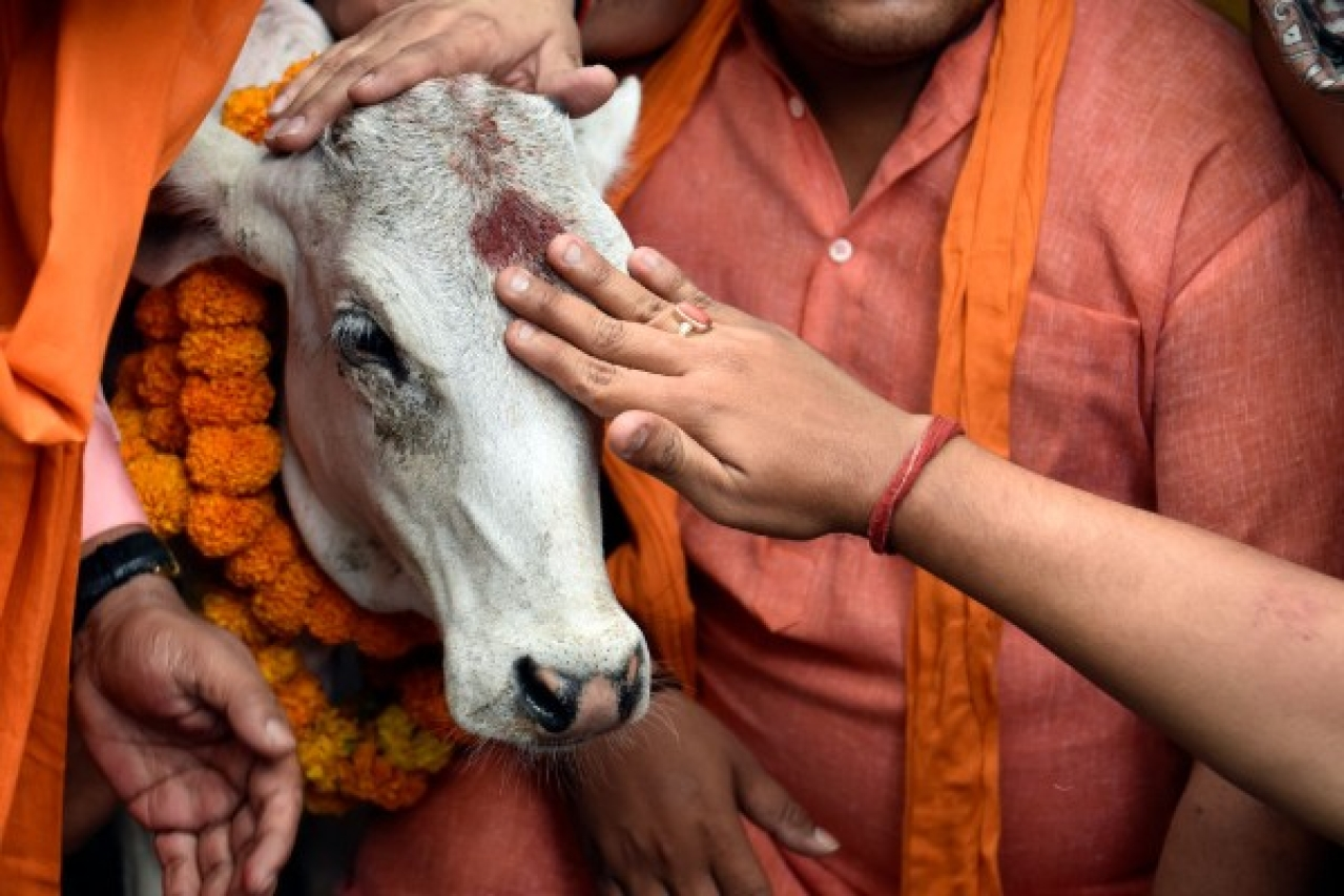 BJP Yuva Morcha activists offering puja of a calf during protest near AICC against slaughter of cow by the youth Congress leader in Kerala. (Mohd Zakir/Hindustan Times via Getty Images)