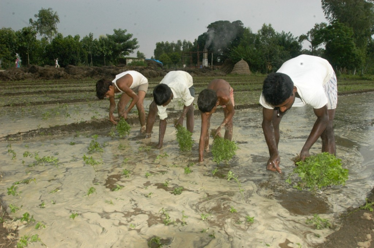 Many Farmers Still Unaware, But Beneficiaries Satisfied With PM Fasal Bima Yojana Says Survey