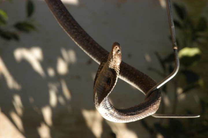 Aazadi For Me Too: Snake Rescued From JNU By Wildlife SOS