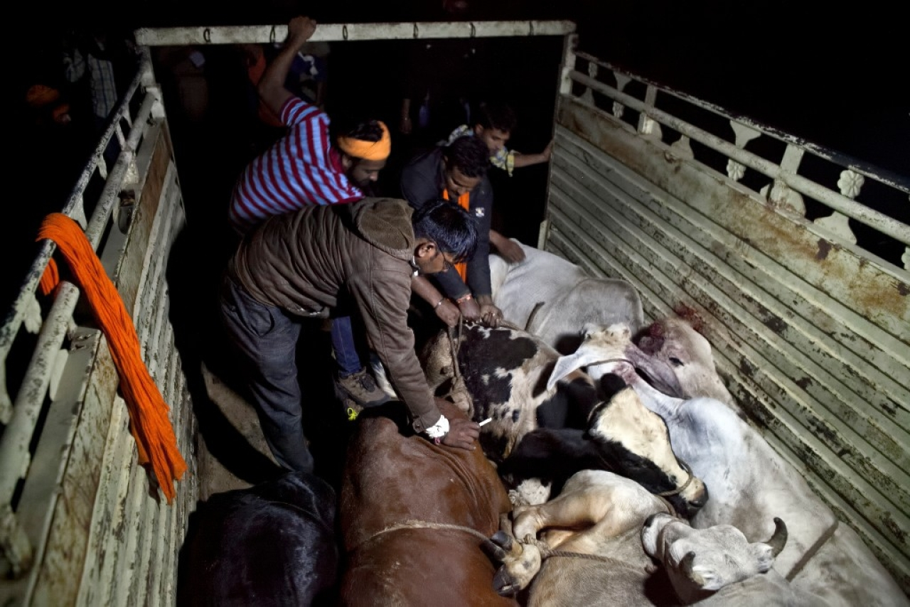 <i>Gau rakshaks </i>of Naval Kishore Sharma's team in Ramgarh, Rajasthan. (Allison Joyce/Getty Images)