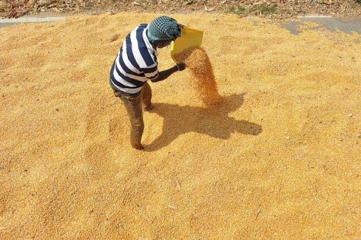 Farmer Income Grew By 37 Per Cent Between 2012 and 2016: NABARD Survey