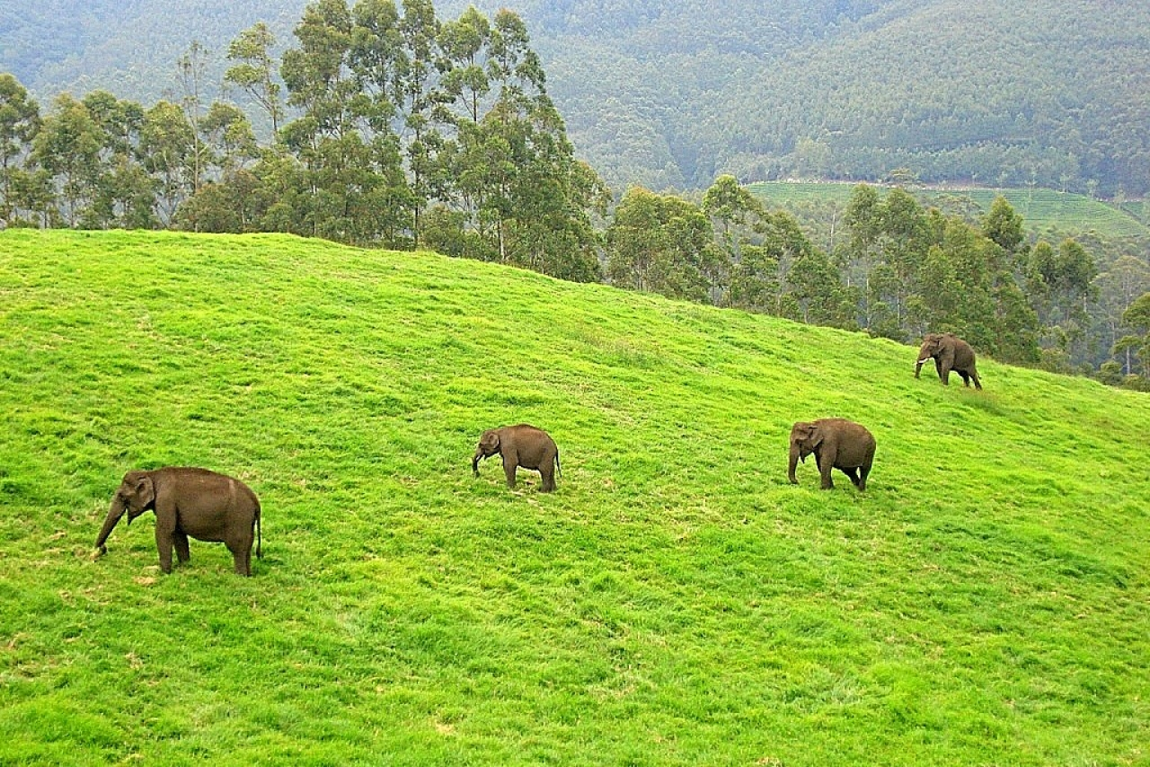 Supreme Court Orders Closure Of 27 Nilgiris Resorts Accused Of Encroaching Upon Elephant Corridors