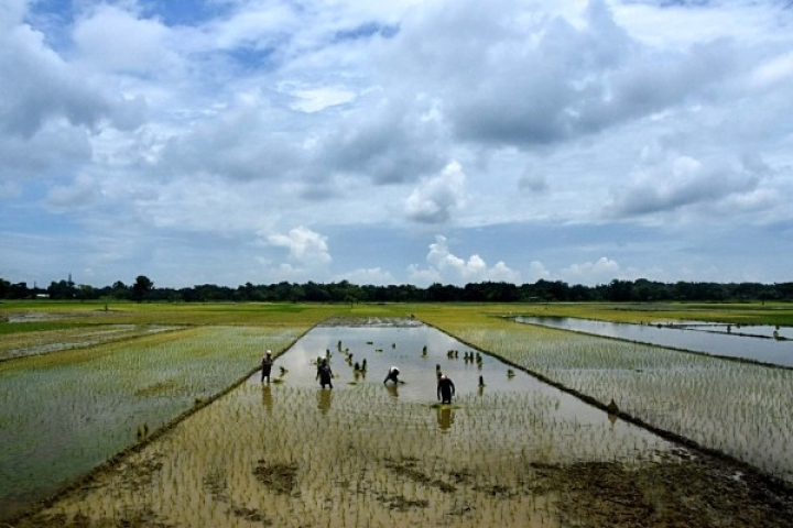 Grain Gain: Record Kharif Output Estimated, Bumper Rice And Sugarcane Harvest Likely