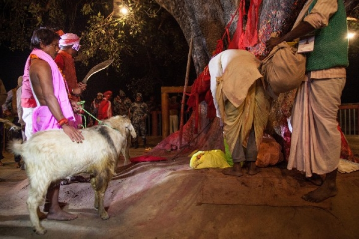 Following Protest By Buddhist Majority And Few Hindu Groups, Sri Lanka To Ban Animal Sacrifices At Hindu Temples