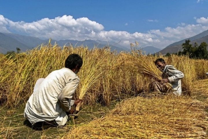 For The Farm Aadmi To Succeed, What's Needed Is Proper Method, Not Random Agriculture