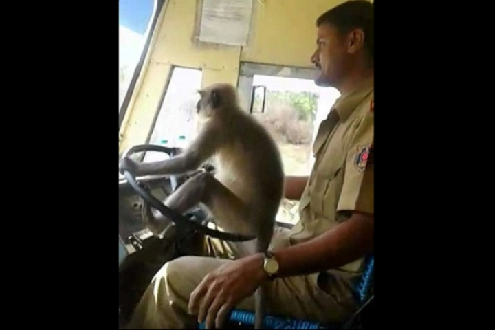KSRTC Driver Who Allowed A Monkey To 'Drive' His Bus, Removed From Duty