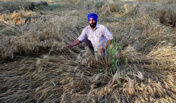 Time To Waive Off Farm Loan Waivers? Losses Rise To Over Rs 9000 Crores In Punjab