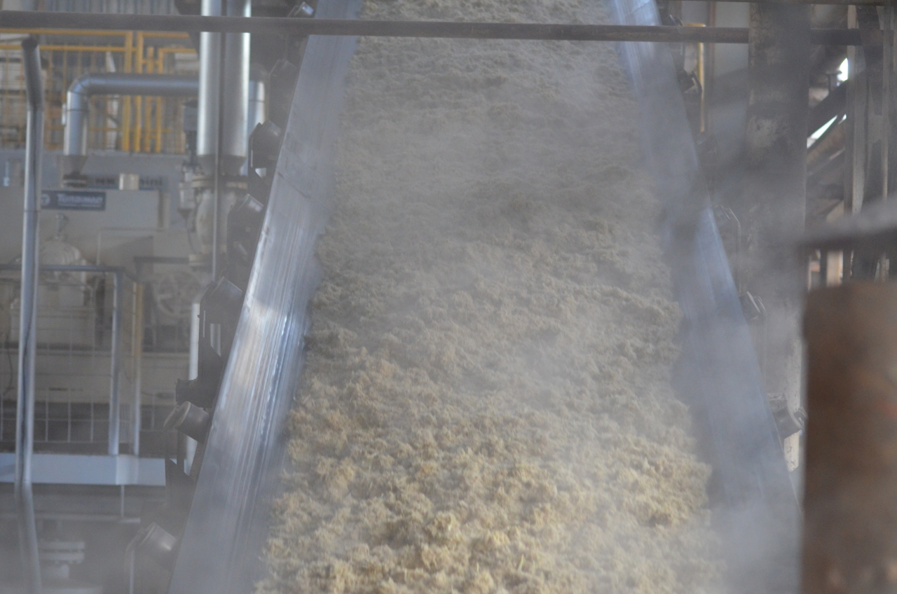 Raw sugar coming out of a cane crushing facility in a sugar factory.