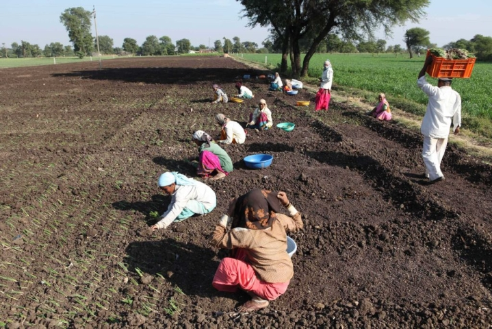 Changing Agri Landscape: How The Centre Can Encourage Farmers To Grow Crops Of Its Choice