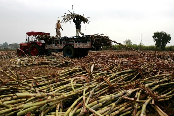 India To Become 'Sugar Bowl Of The World': Expected To Topple Brazil As World's Largest Sugar Producer