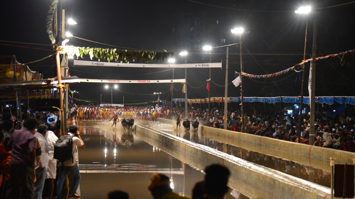 Kambala: How Enthusiasts And Farmers Are Keeping Alive An Old Tradition