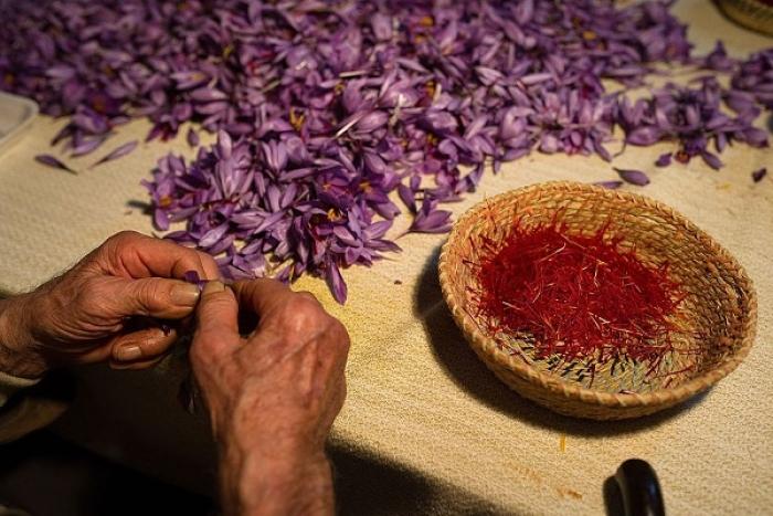 Not Just A 'Kashmir Ki Kali' Anymore: Retired Bureaucrat Successfully Grows Saffron In Rajasthan's Pilani