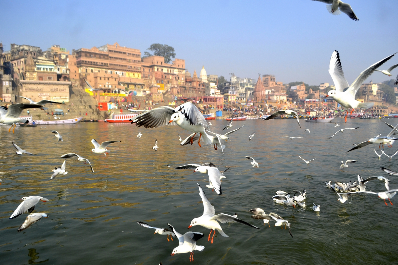 A flock of migratory Siberian birds, on December 17, 2018 in Varanasi, India. (Rajesh Kumar/Hindustan Times via Getty Images)