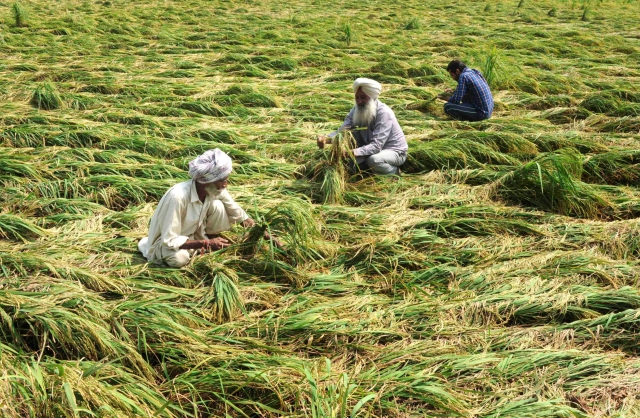 How Marginal Farmers Can Be Freed From The Subsidy Stranglehold