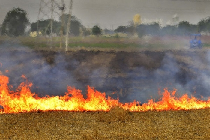 Why Burn Stubble When You Can Sell It? NTPC Generates Electricity Via Agri-Waste At Dadri Power Plant