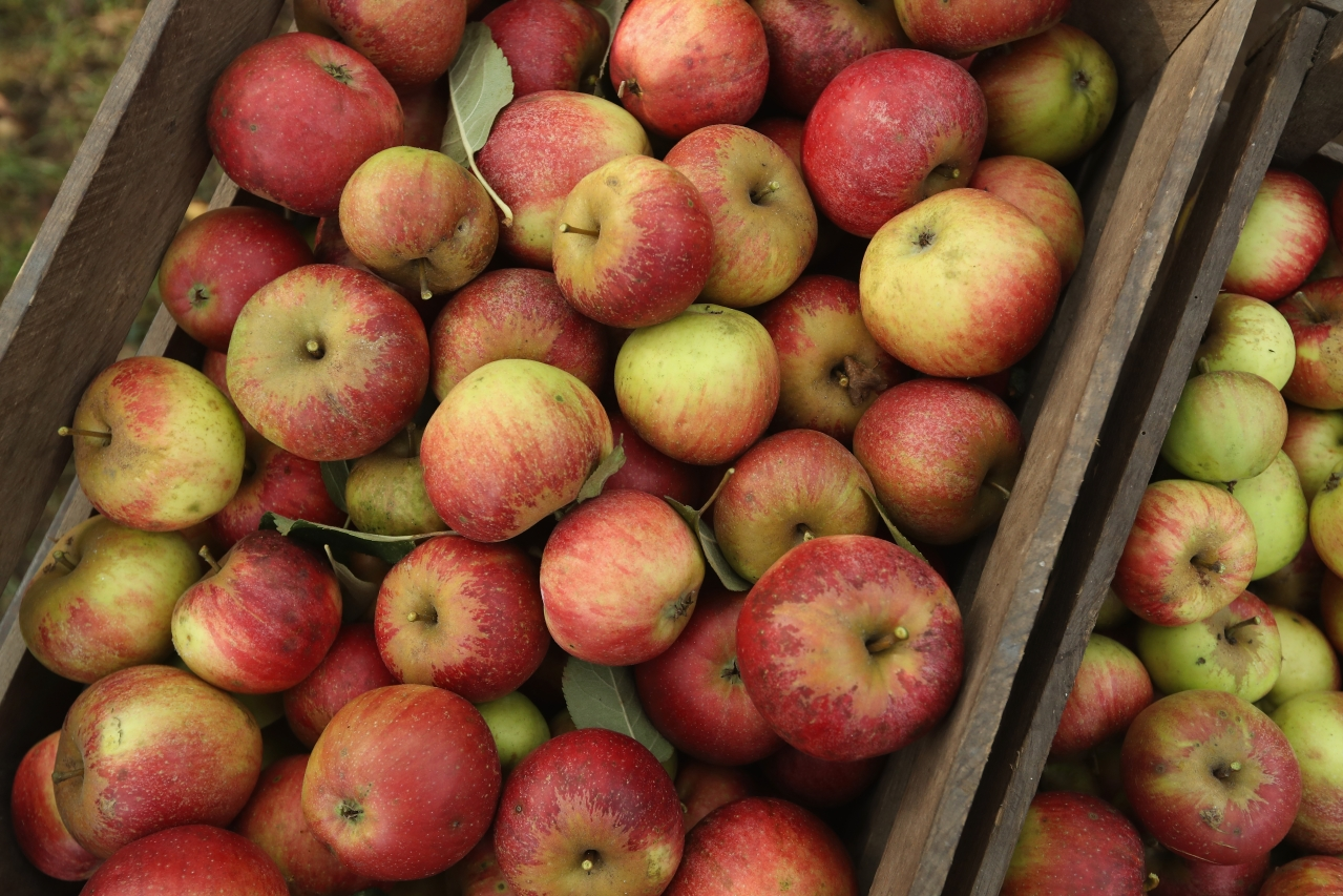 For The First Time Ever, German Apples To Be Sold In India; To Arrive In Five Weeks' Time