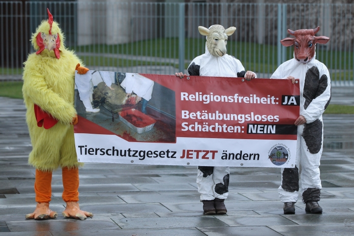 Belgium Bans Ritual Slaughter Of Animals: Hit By Protests From Muslim, Jewish Groups