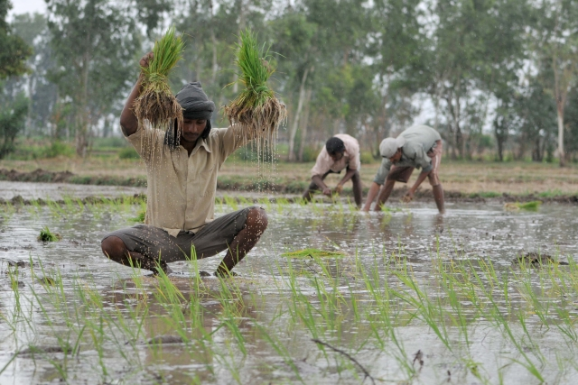 Provisions For Direct Income To Small Farmers In Interim Budget Could Be A Game Changer