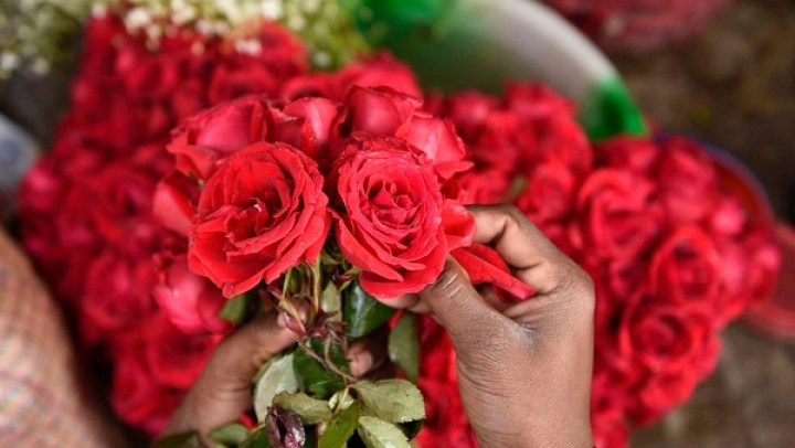 It's Bloomsday This Valentine's: Floral Exports To See Big Surge, Roses Worth Rs 30 Crore To Be Shipped Abroad