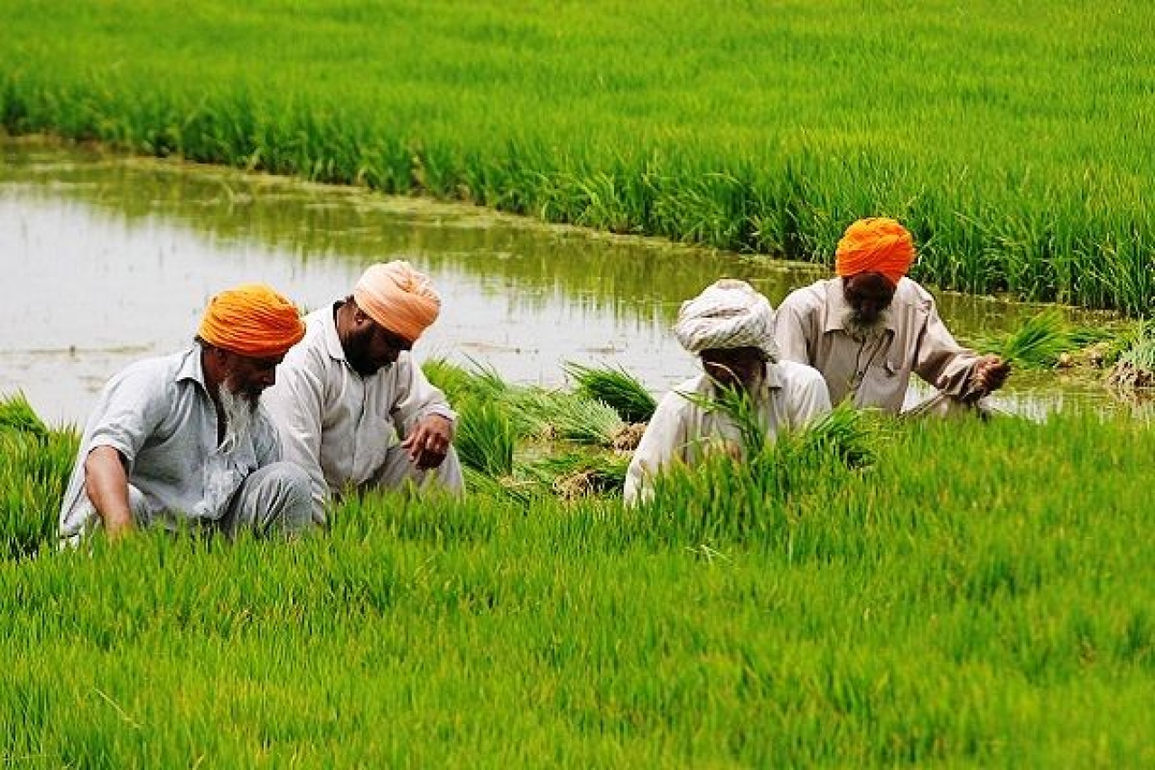 Farmers working in fields (Bharat Bhushan/Hindustan Times via Getty Images)