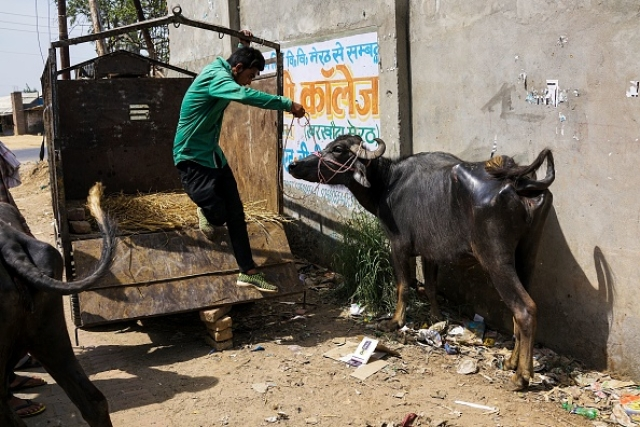 Ground Report: Despite Yogi's Ban, Illegal Slaughterhouses Flourish In Meerut; Residents Bear The Brunt