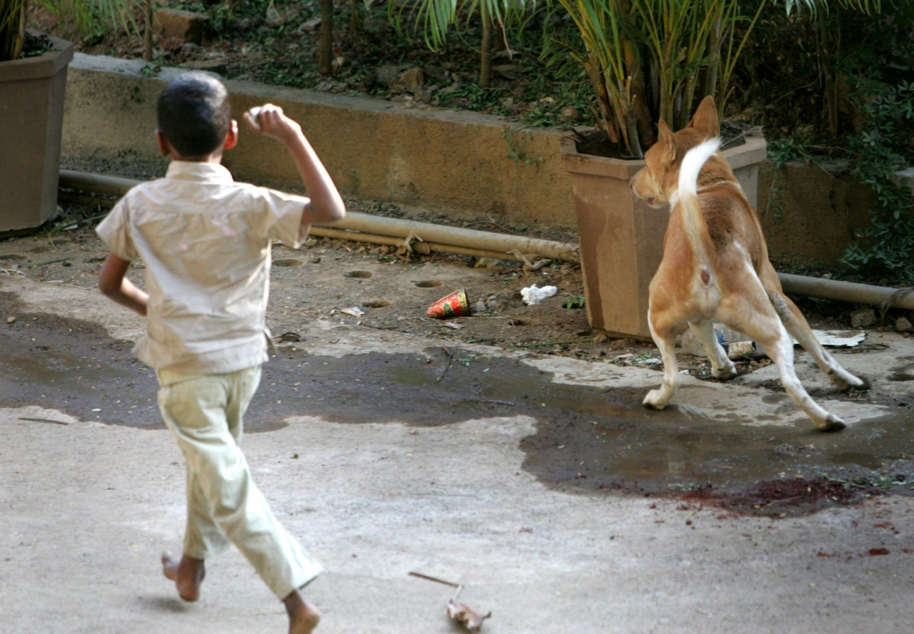How The Animal Welfare Board Of India Has Virtually