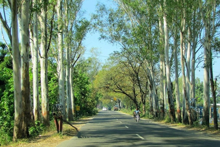 The Eucalyptus Problem Of Indian Agriculture