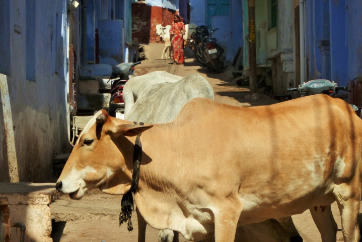 UP Slaughterhouses: How Effective Was The Crackdown?