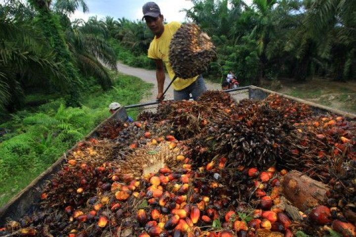 Trade War Looms Over EU Curbs On Palm Oil Use For Biofuels, Impact Likely On India